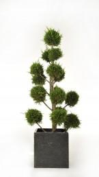 Cypresse PomPom mit Terrazzo Übertopf mieten